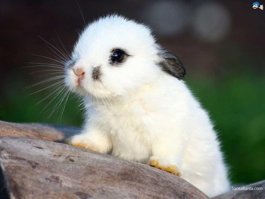 Download Cute Rabbit Wallpaper